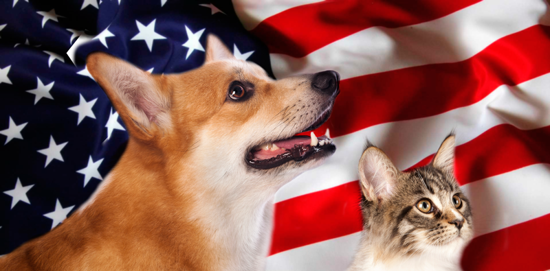 dog and cat in front of US flag